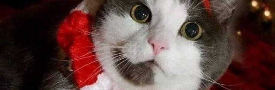 Котките Cover Image